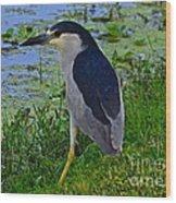 Black Crowned Night Heron II Wood Print