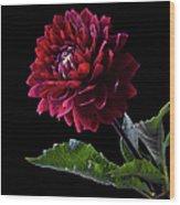 Black Dahlia Wood Print