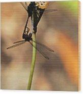 Black Dragonfly Love Wood Print