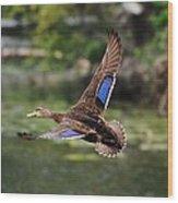 Black Duck Wood Print
