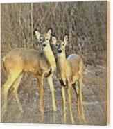 Black Ear Deer Wood Print