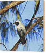 Black Faced Cuckoo Shrike V3 Wood Print