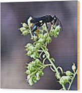 Black Flower Feeding Wasp Wood Print