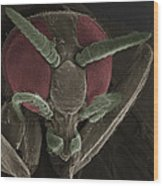 Black Fly, Sem Wood Print