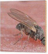 Black Fly Wood Print