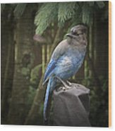 Black Headed Blue Jay Wood Print