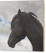 Black Icelandic Horse Stallion Wood Print