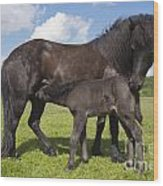 Black Icelandic Horse With Foal Wood Print