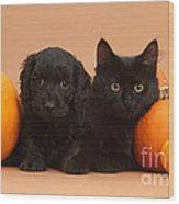Black Kitten & Puppy With Pumpkins Wood Print