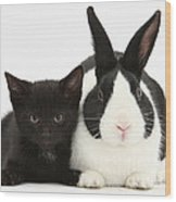 Black Kitten Dutch Rabbit Wood Print