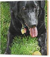 Black Lab Dog With A Ball Wood Print by Elena Elisseeva