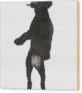 Black Labrador X Portuguese Water Dog Wood Print