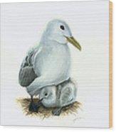 Black-legged Kittiwake Parent And Chick Wood Print by Logan Parsons