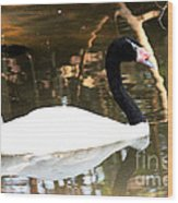 Black Neck Swan Wood Print