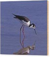 Black-necked Stilt Bird Foraging In Wood Print