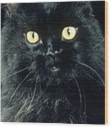 Black Persian Cat Wood Print