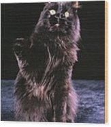 Black Persian Cat Reaches Wood Print