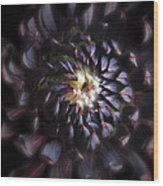 Black Purple Dahlia - Flower Photograph Wood Print