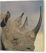 Black Rhinoceros Diceros Bicornis Close Wood Print