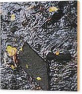 Black Rock At Graue Mill Wood Print by Todd Sherlock