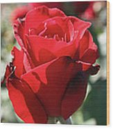 Black Rose Red Wood Print