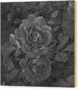 Black Roses Wood Print