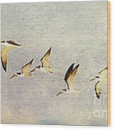 Black Skimmers On The Move Wood Print