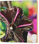 Black Spider Petunia Wood Print