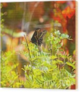 Black Swallow Tail Butterfly In Autumn Colors Wood Print