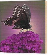Black Swallowtail 1 Wood Print