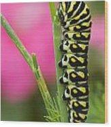 Black Swallowtail Caterpillar On Garden Wood Print