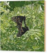 Black Swallowtails Mating Wood Print