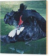 Black Swan Grooming Wood Print