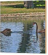 Black Swan's In Palm Springs Wood Print