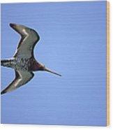 Black-tailed Godwit Limosa Limosa Wood Print