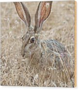 Black-tailed Hare Wood Print