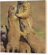 Black-tailed Prairie Dogs Wood Print