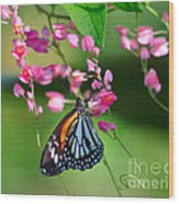 Black Veined Tiger Butterfly Wood Print