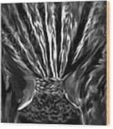 Black Velvet Wood Print