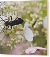 Black Wasp 2 Wood Print