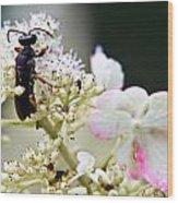 Black Wasp 3 Wood Print