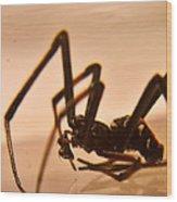 Black Widow Male 2 Wood Print by Douglas Barnett
