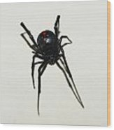 Black Widow Polka Dots Wood Print