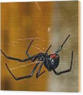 Black Widow Trap Wood Print by David Waldo