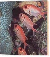 Blackbar Soldierfish Wood Print