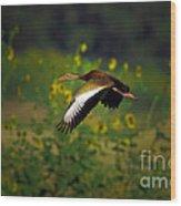Blackbellied Whistling Duck In Flight Wood Print