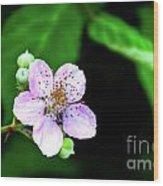 Blackberry Bloom Wood Print