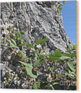 Blackberry On The Rock 04 Wood Print