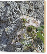 Blackberry On The Rock Square Format Wood Print