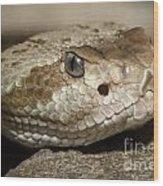 Blacktail Rattlesnake Wood Print